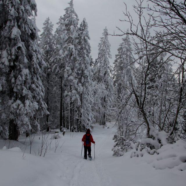Dämmerung im winterlichen Gurnigelwald
